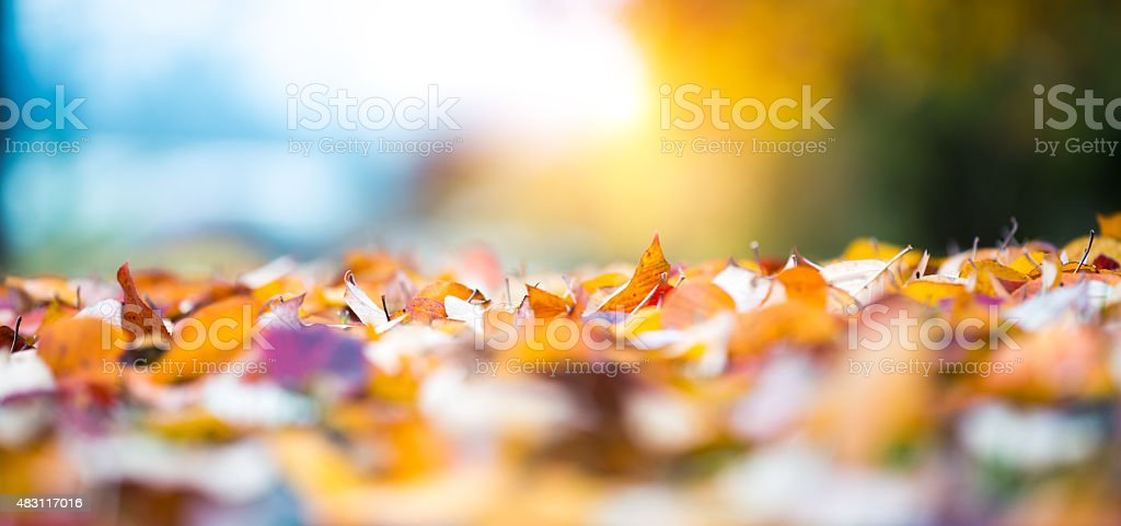 Autumn Leaves Lying On The Ground stock photo