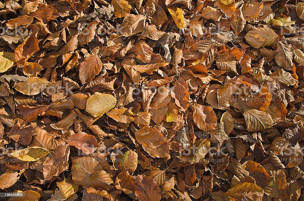 Autumn leaves near lake Monticchio - Basilicata royalty-free stock photo