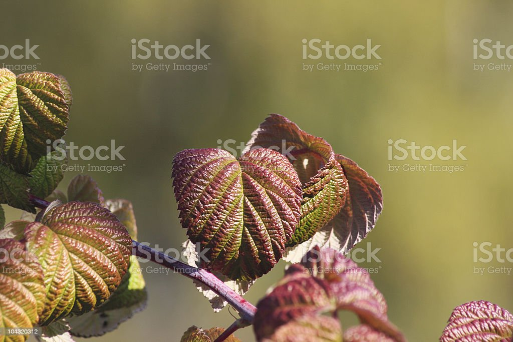 Jesień liście z malin zbiór zdjęć royalty-free