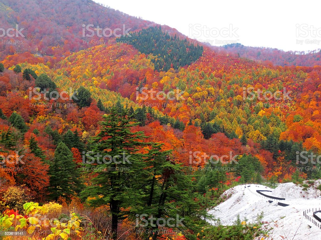 ????????????Japanese colored leaves stock photo