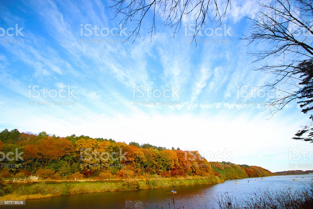 Autumn leaves of the lakeside stock photo