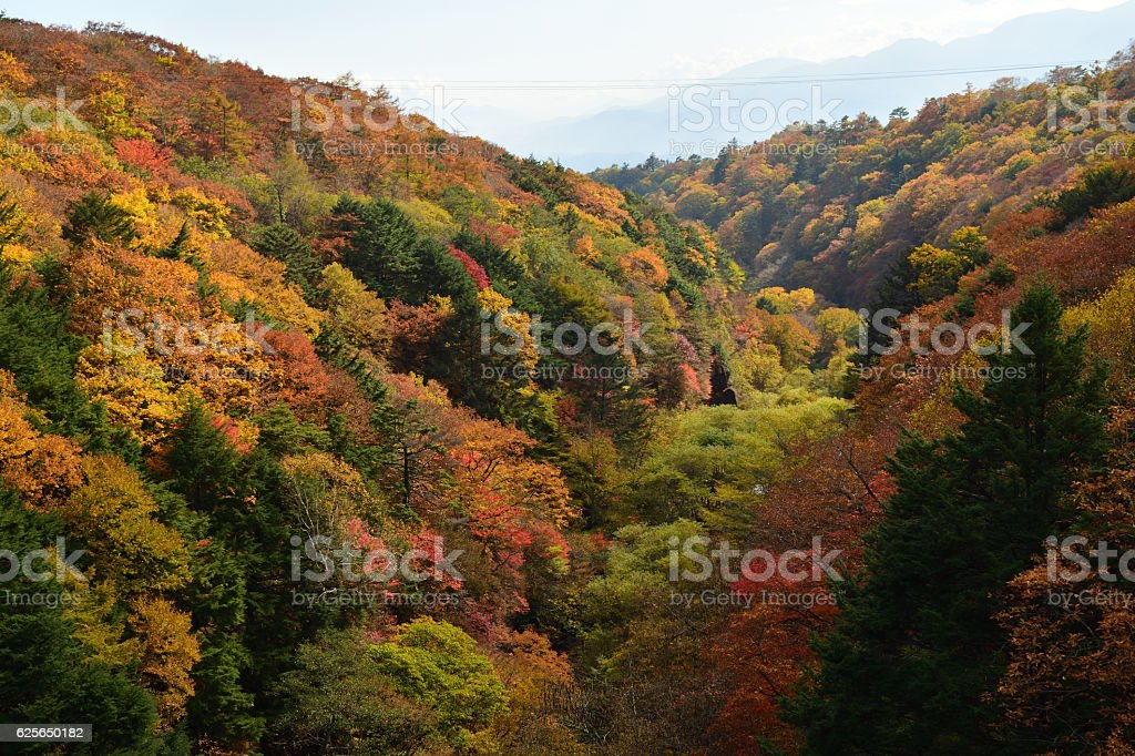 Autumn leaves of the valley seen from Higashisawa Ohashi stock photo