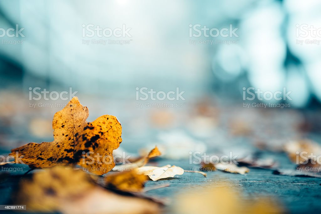 Autumn Leaves On A Footpath stock photo