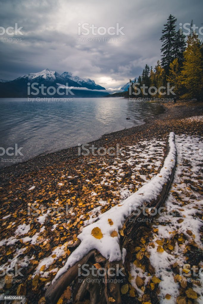 Autumn leaves on a lake coast covered by snow. stock photo