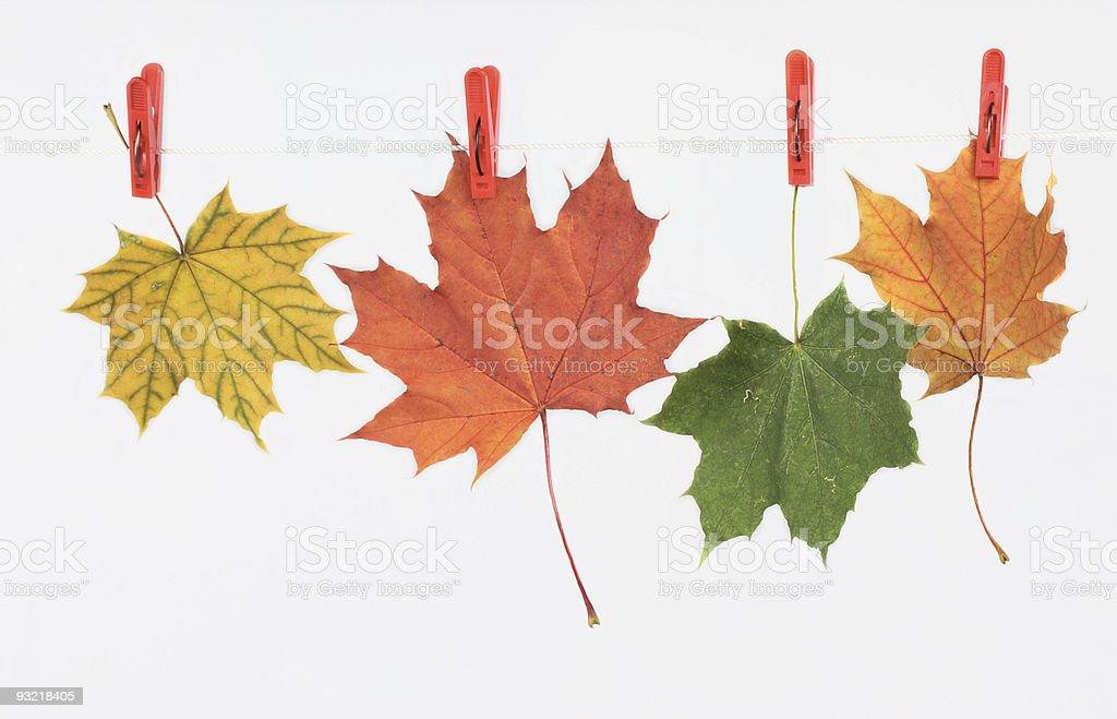 Jesienią liście na obrusie przewód zbiór zdjęć royalty-free