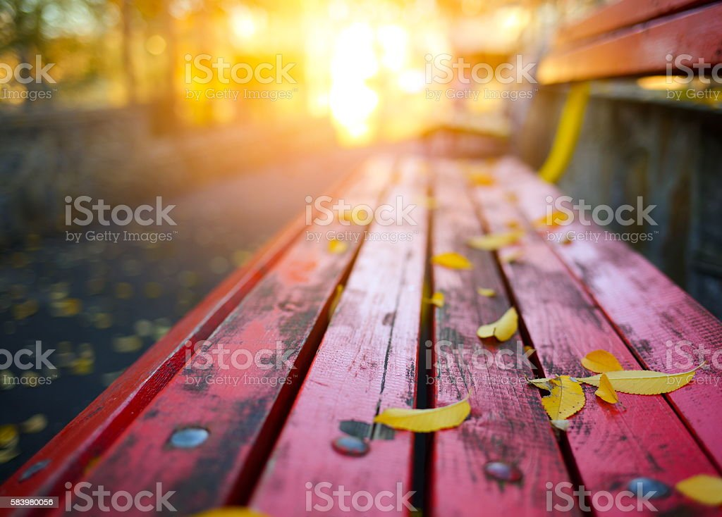 Autumn leaves on a park bench stock photo