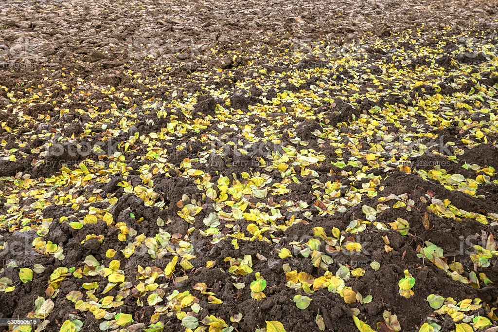 Autumn leaves on a plowed field royalty-free stock photo