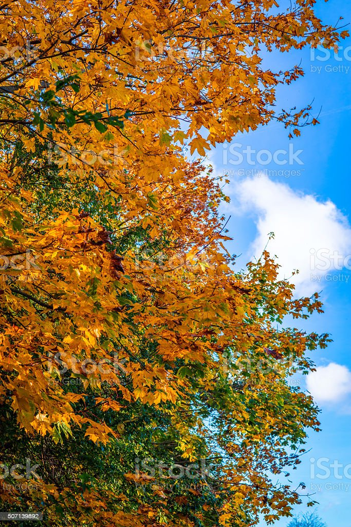 Autumn leaves on a tree on a sunny day stock photo