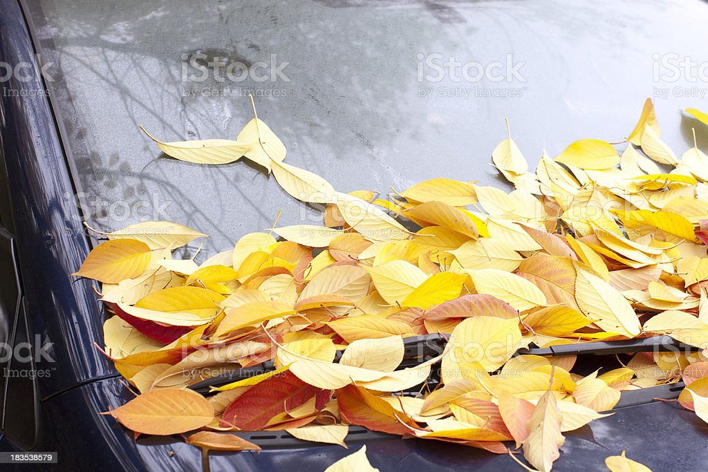 Autumn leaves on a windshield royalty-free stock photo