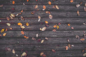 Autumn leaves on a wooden background