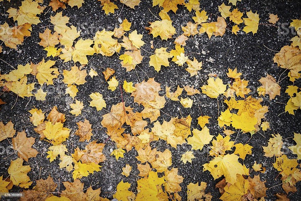 Autumn leaves on asphalt royalty-free stock photo