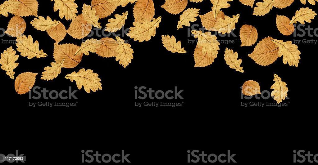 Autumn Leaves On Black royalty-free stock photo