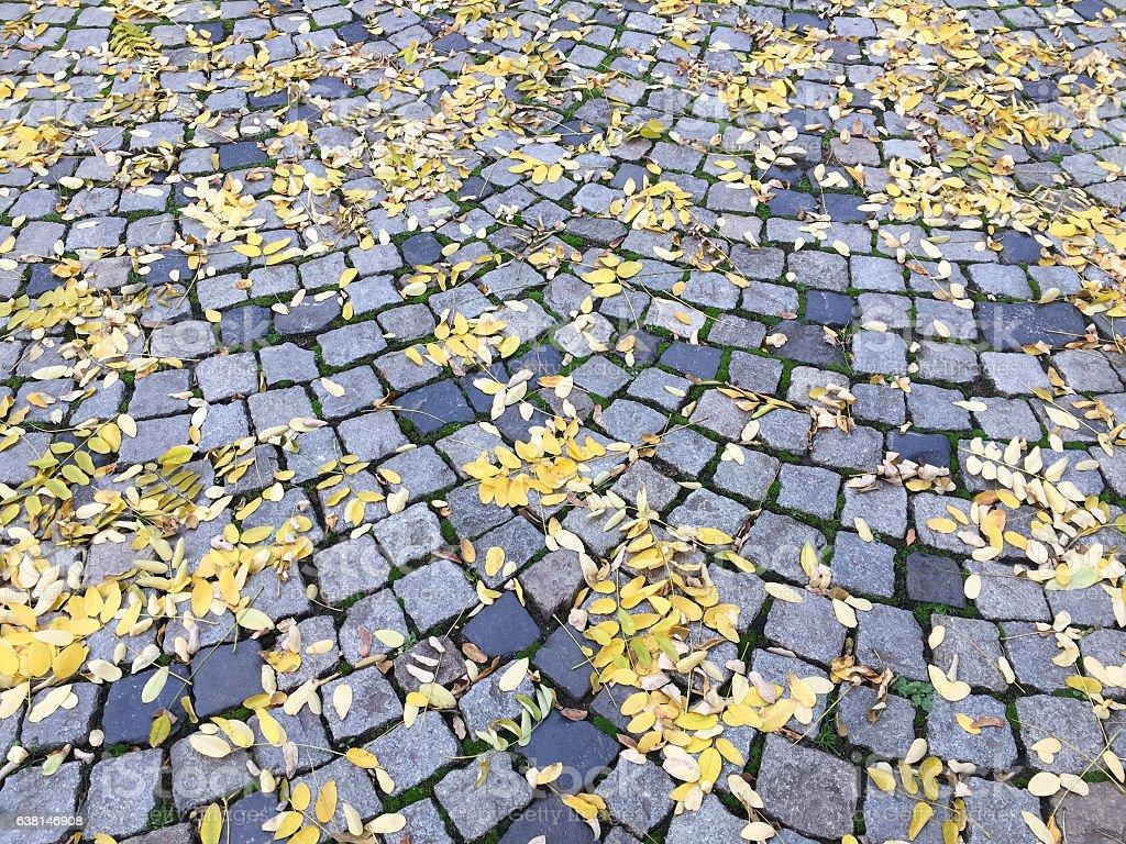 Autumn leaves on cobblestone stock photo