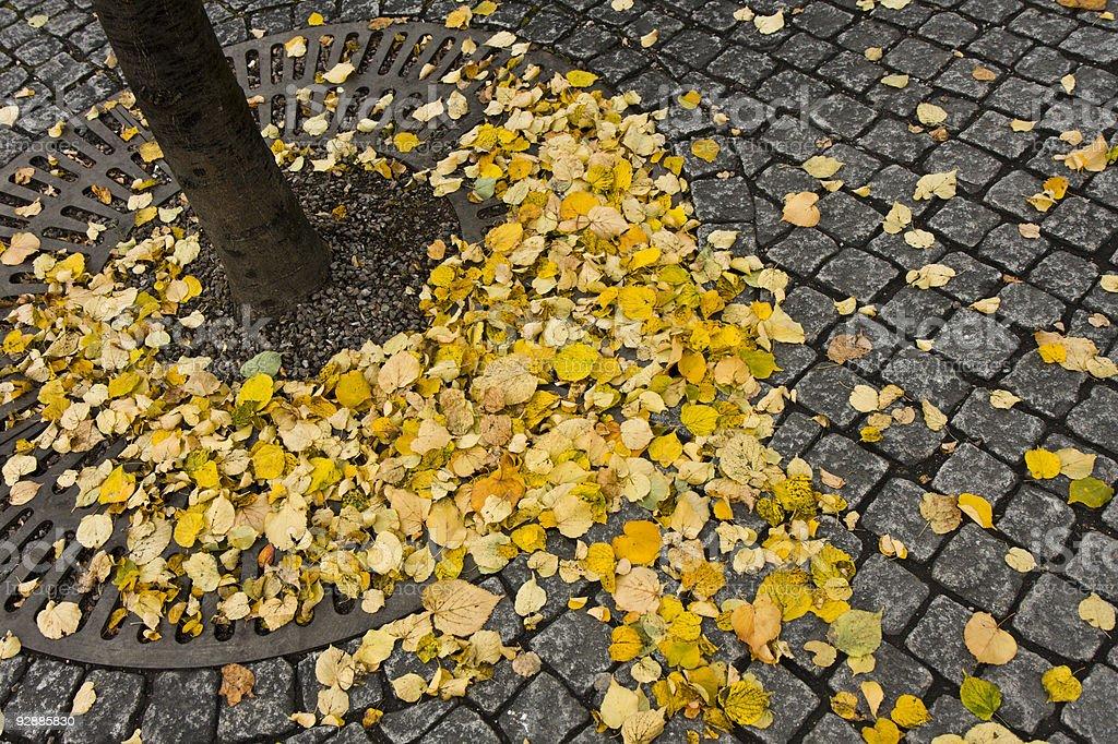 Autumn leaves on cobblestones stock photo