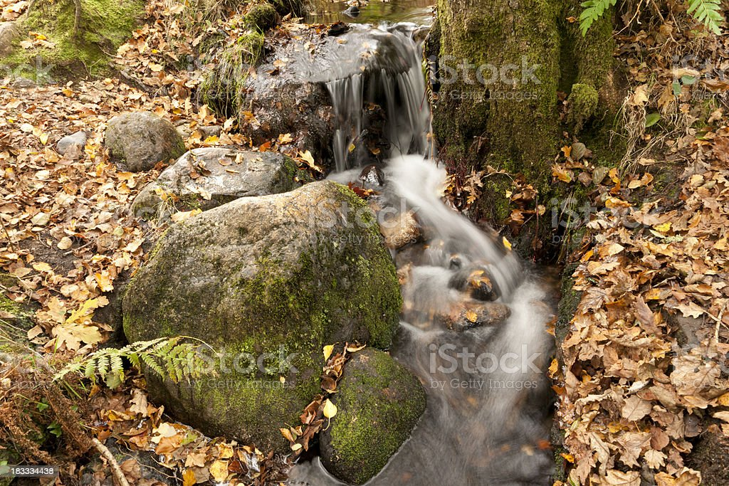 Autumn leaves on Dartmoor by River Dart stock photo