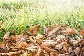 Autumn leaves on dew