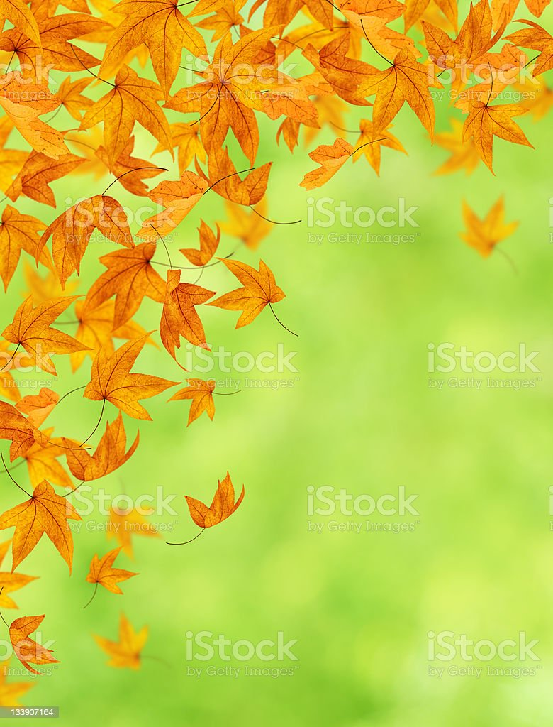 Autumn Leaves On Green Background royalty-free stock photo