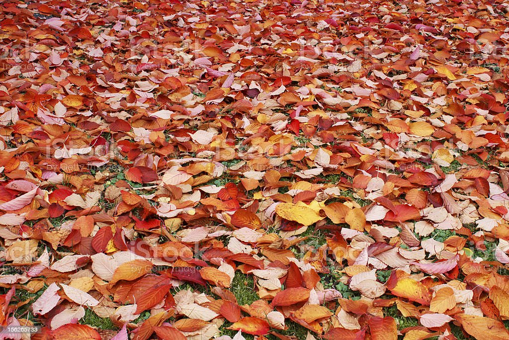 Autumn leaves on ground royalty-free stock photo