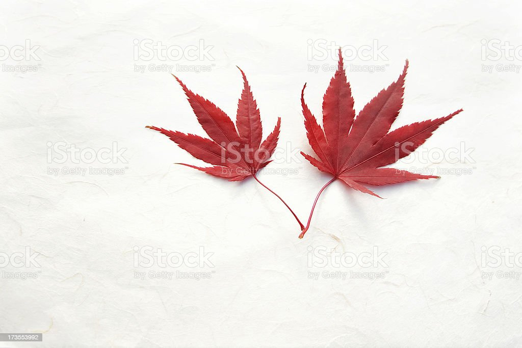 Autumn leaves on hand made paper background red white maple stock photo