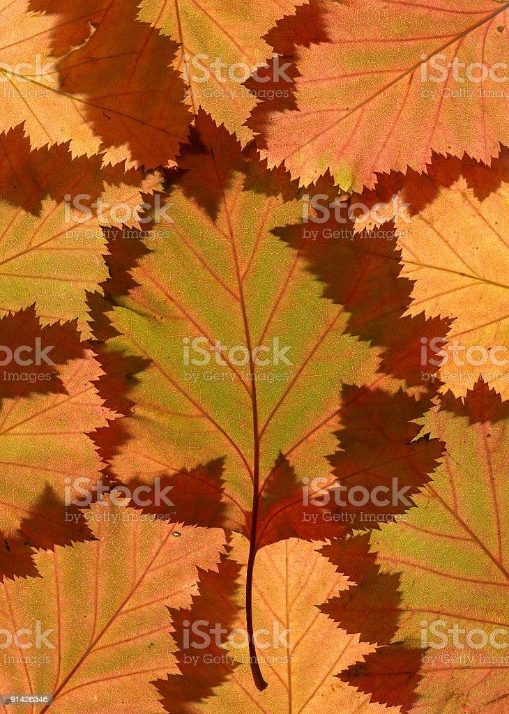 Autumn leaves on lightbox royalty-free stock photo