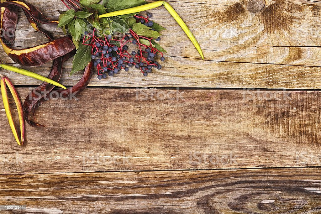 秋の落ち葉に古い木 ロイヤリティフリーストックフォト