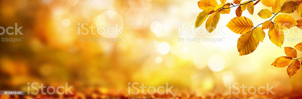 Autumn leaves on shimmering blurred background stock photo