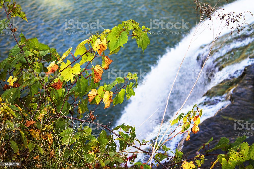 Autumn leaves on the background of a waterfall stock photo