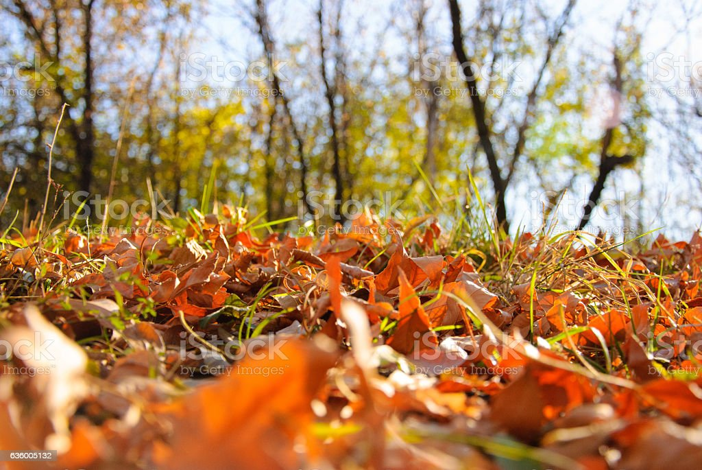 Autumn leaves on the forest stock photo