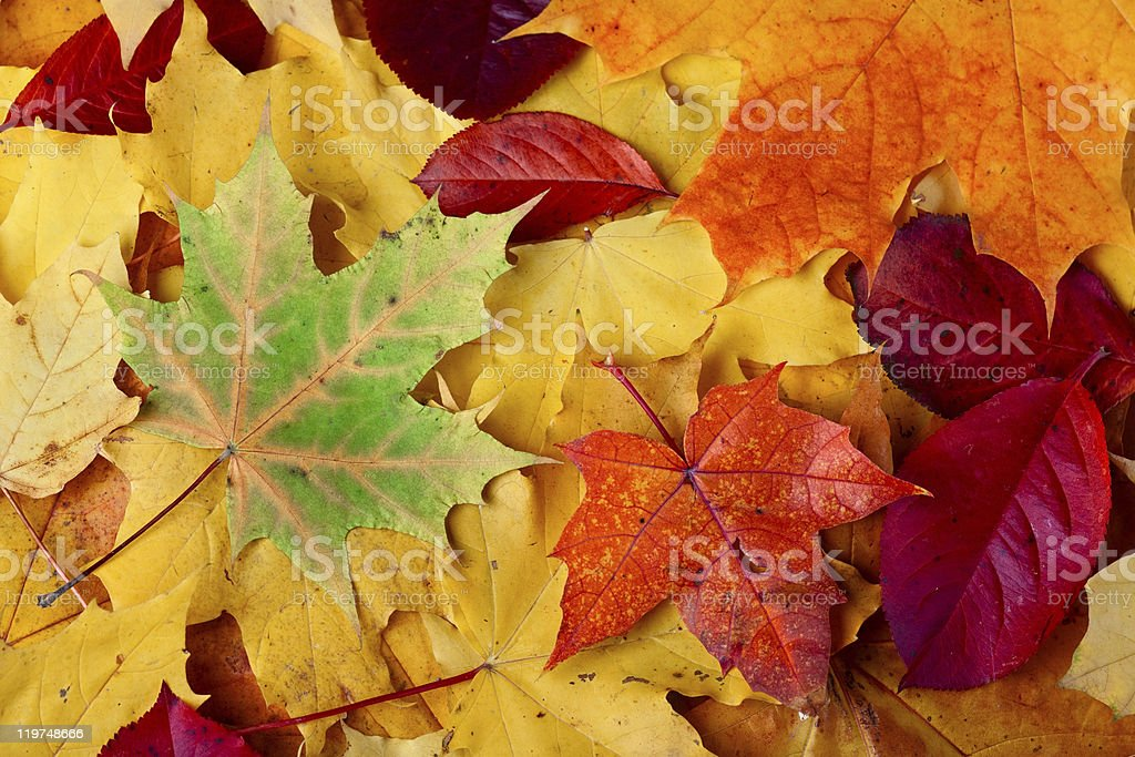 Autumn leaves on the ground royalty-free stock photo