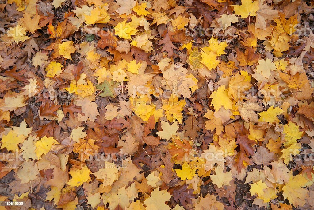 Autumn leaves on the ground. royalty-free stock photo