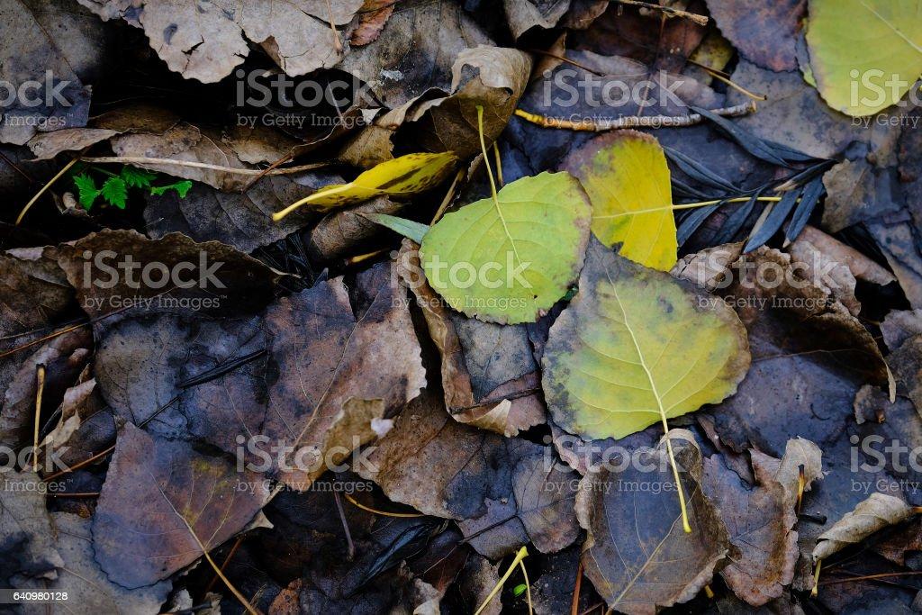 Autumn leaves on the ground stock photo