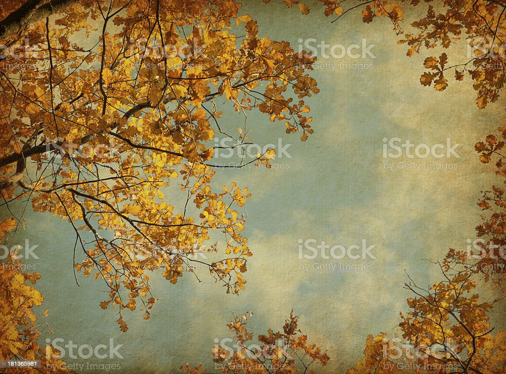 Autumn leaves on the sky background. royalty-free stock photo