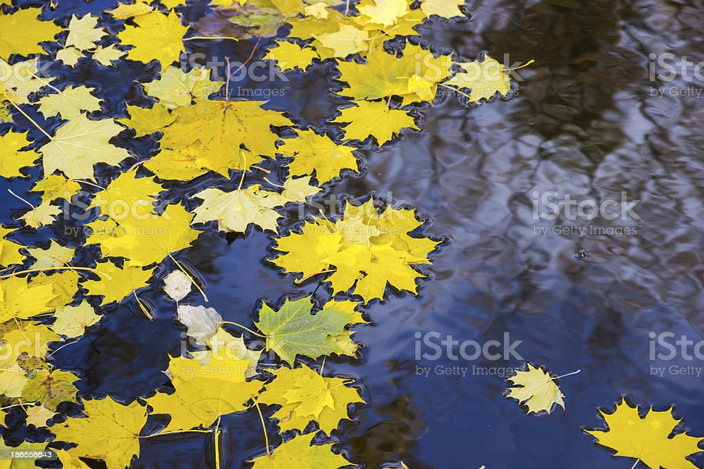 autumn leaves on the water royalty-free stock photo