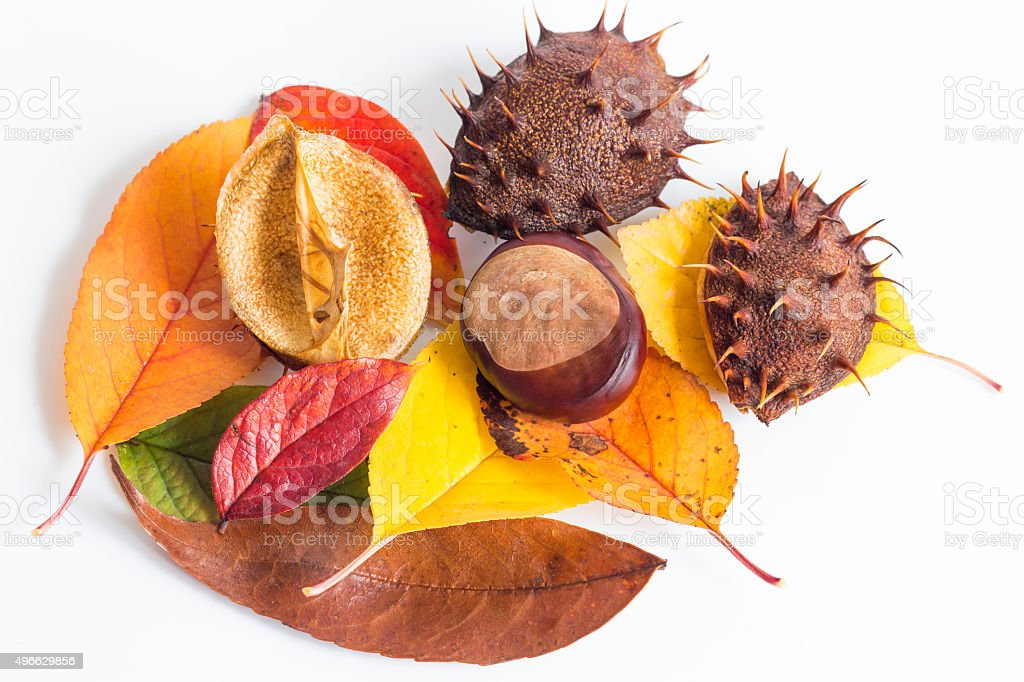 Autumn leaves on white background stock photo