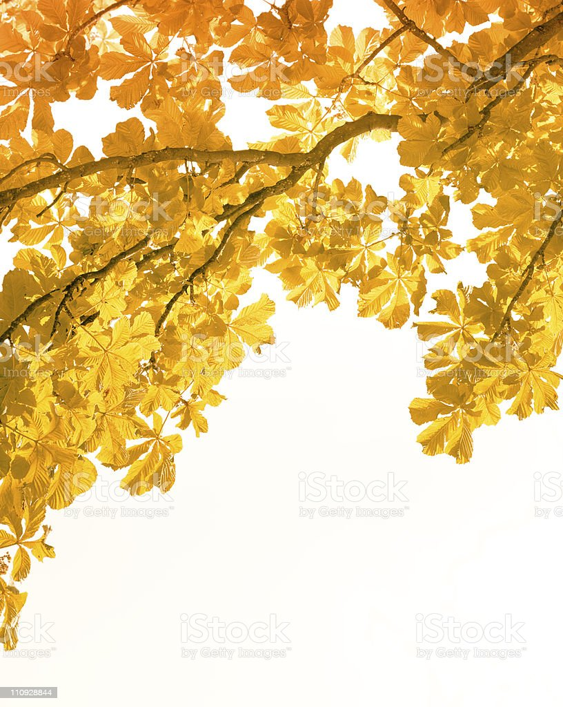 Autumn leaves on white royalty-free stock photo