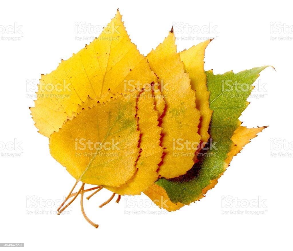 Autumn leaves on white stock photo