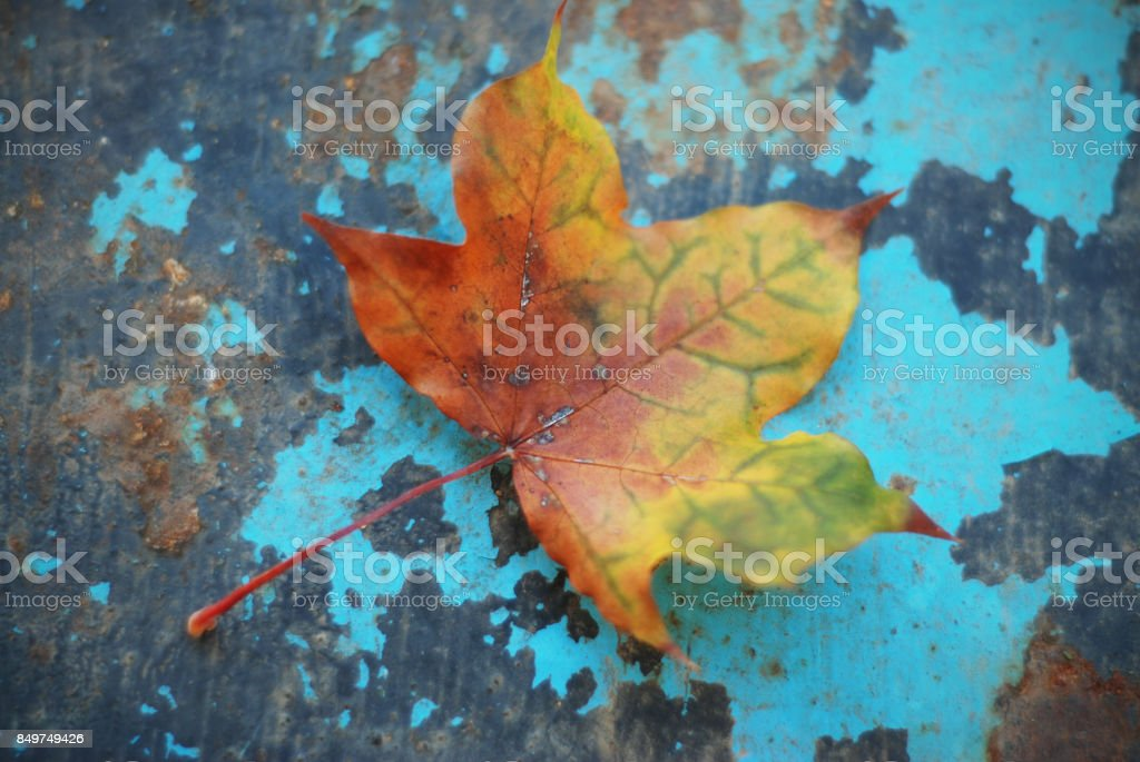 Autumn leaves over blue wooden background stock photo