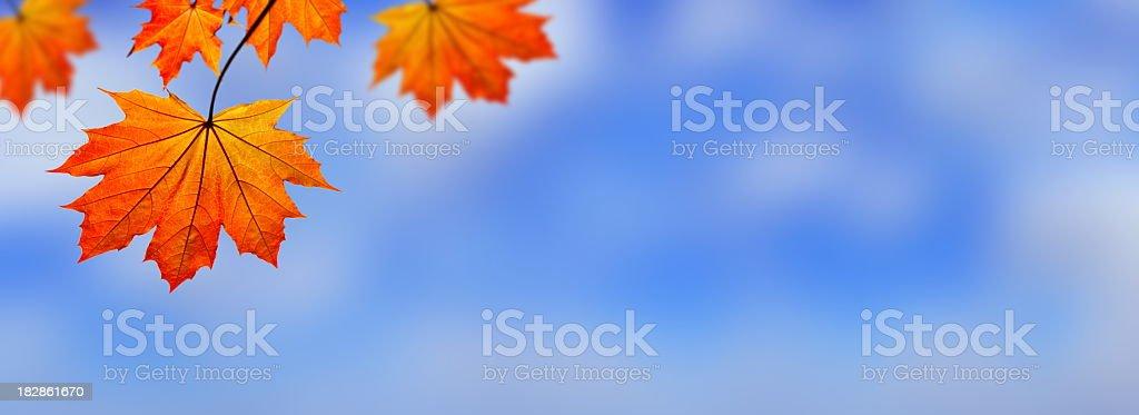 Autumn Leaves Panorama - XXXL royalty-free stock photo