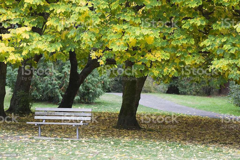Autumn leaves, park bench royalty-free stock photo
