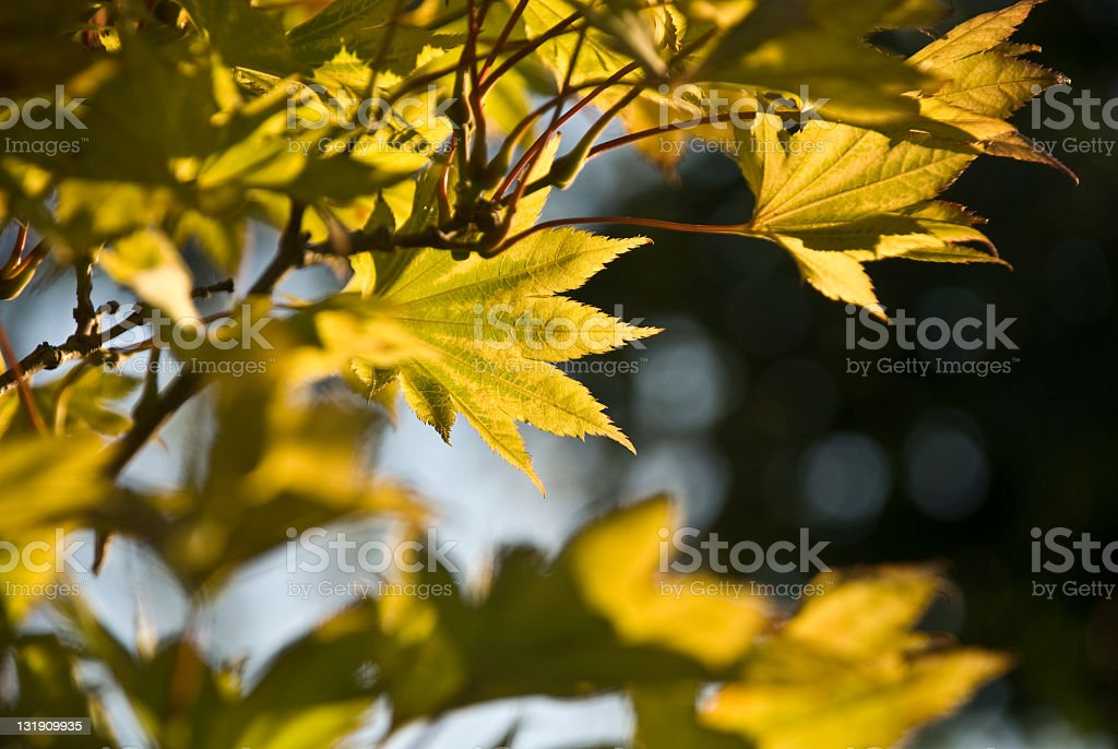 Autumn leaves royalty-free stock photo