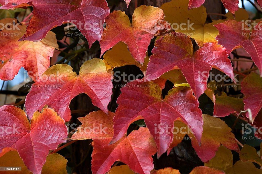 秋の落ち葉 ロイヤリティフリーストックフォト