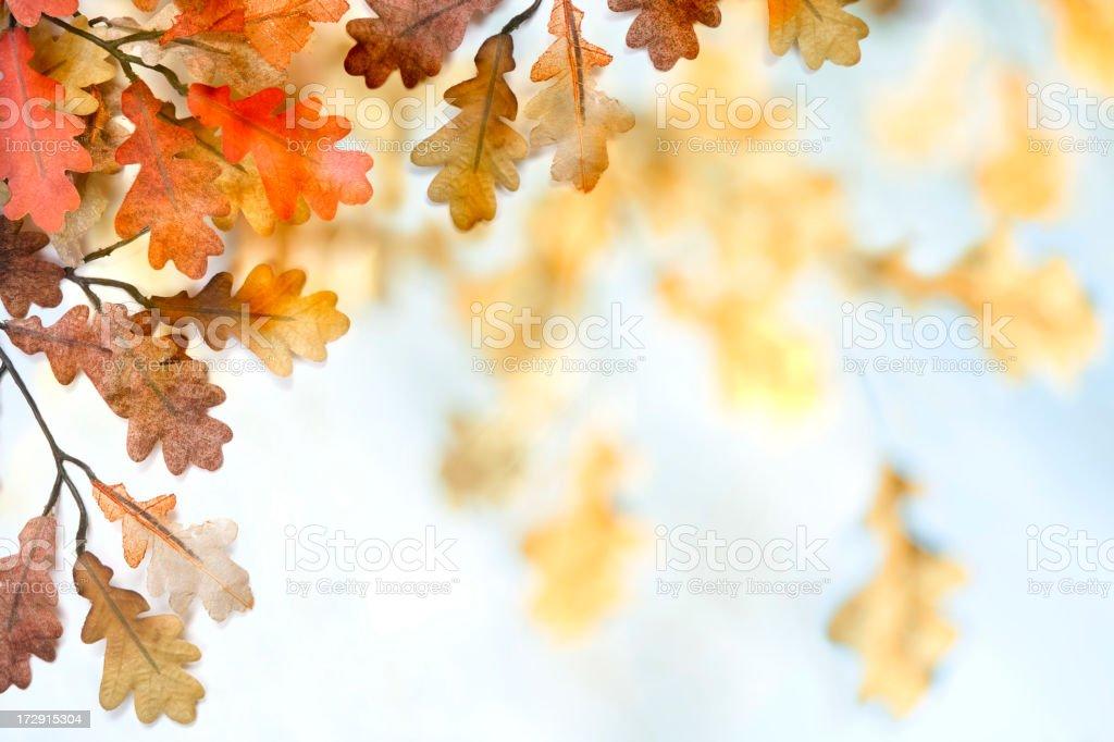 Autumn Leaves  (XXL) stock photo
