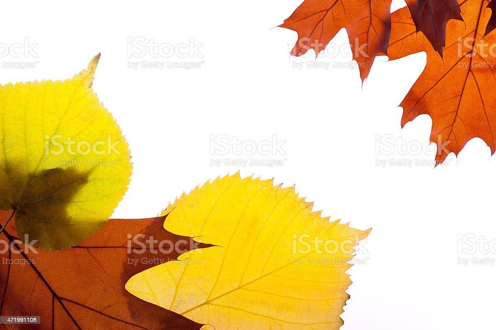Autumn leaves. stock photo