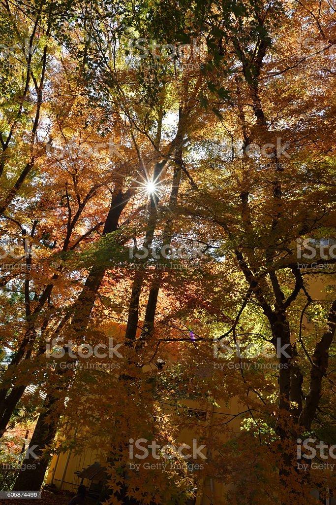 Folhas de Outono foto de stock royalty-free