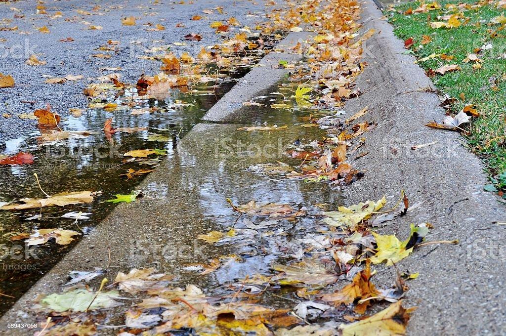 Autumn leaves, puddle, street. stock photo