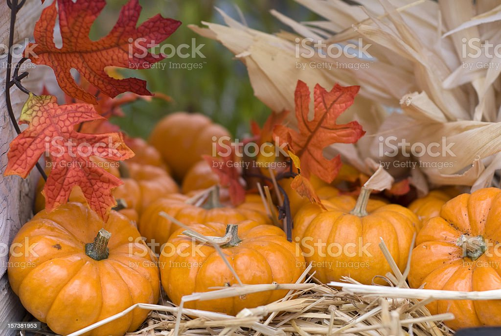 autumn leaves pumpkins thanksgiving halloween decorations fall food background royalty free stock photo - Halloween Decorations Food