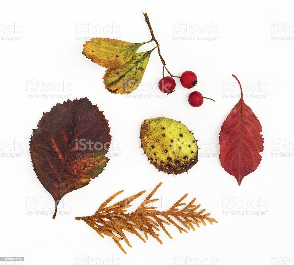 Autumn leaves, rosehip, horse chestnut and twig stock photo