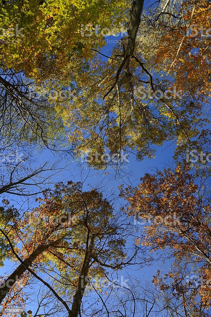 Autumn Leaves sidelit by sunshine royalty-free stock photo
