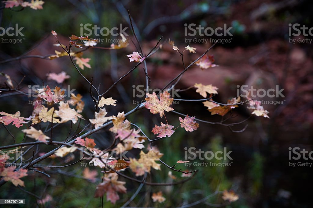 Autumn leaves turn to brown stock photo