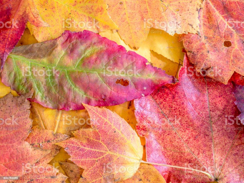 Autumn leaves variety stock photo
